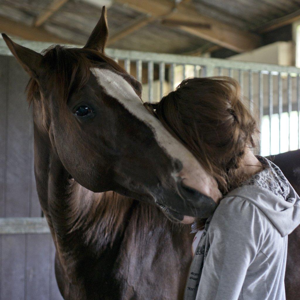 Gisella Bartels, paardenfysiotherapeut, D'Artagnan