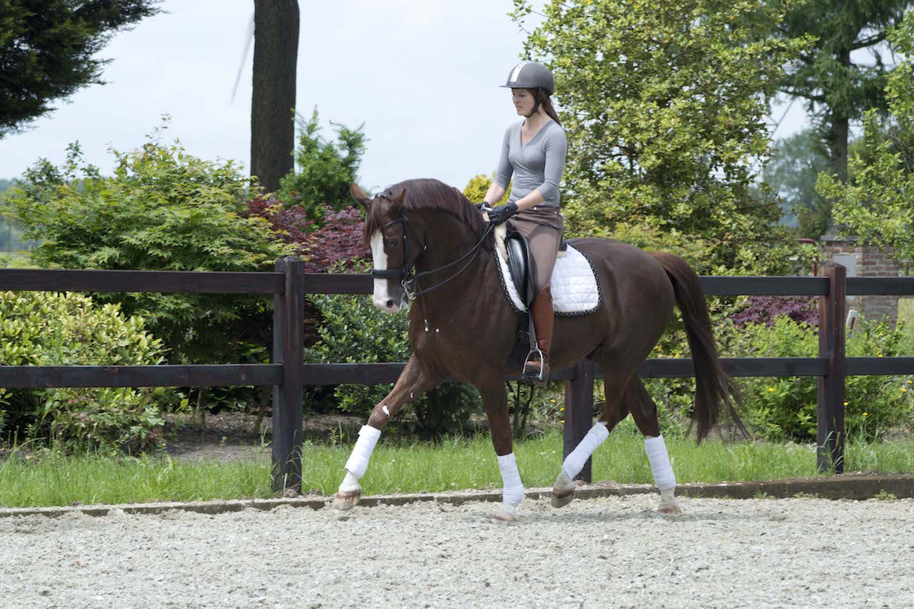 Gisella Bartels Dressuurtraining Fysiotherapie paard, paardenfysitoherapie