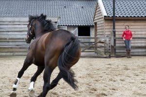 training paard