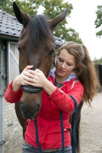 manipulaties en mobilisatie zijn een onderdeel van fysiotherapie en chiropraxie voor paarden