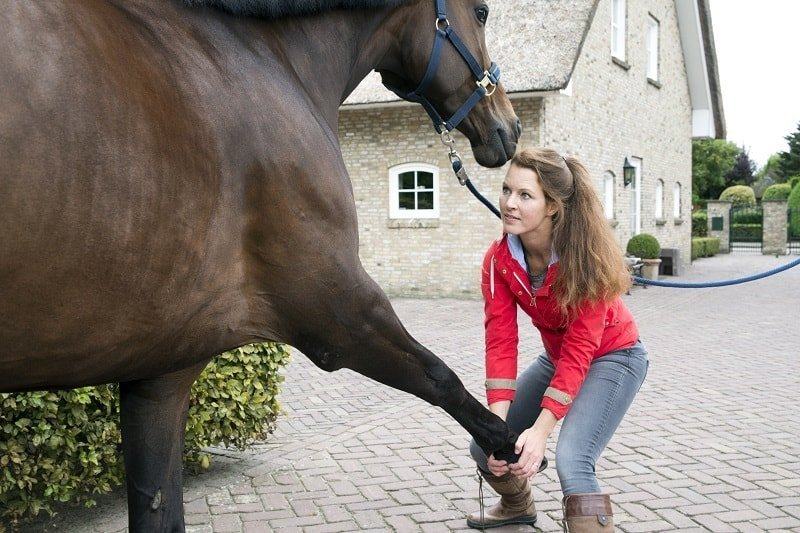 Opleiding tot sportmasseur voor paarden