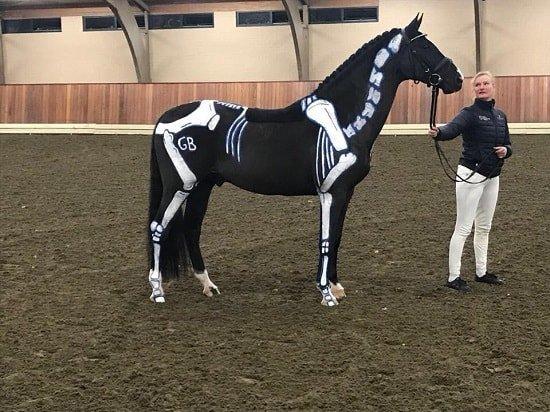BBB-clinic, Skelet paard, biomechanica paard, Gisella Bartels, Karen Nijvelt