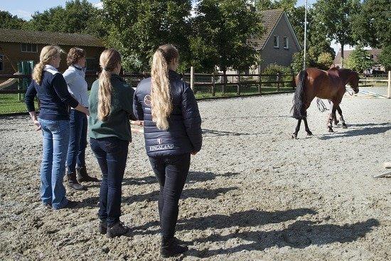Bewegingsanalyse paard, opleiding tot sportmasseur, Gisella Bartels