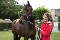 Paardenfysiotherapeut 2.0