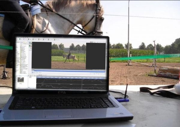 inspanningsfysiologie bij paarden