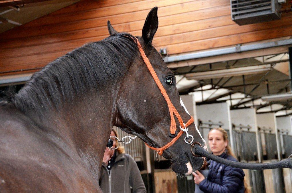 Themadag pijn bij paarden
