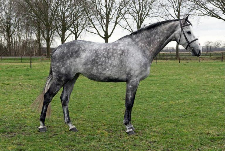 belasting van het jonge paard