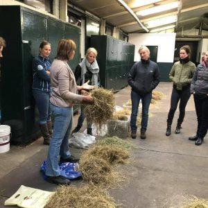 voeding voor paarden