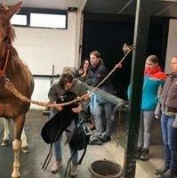 Zadels voor paarden 2