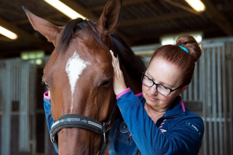 sportmassage voor paarden